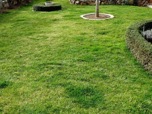 Rasen Pflege Frühjahr Garten Familien Freizeit