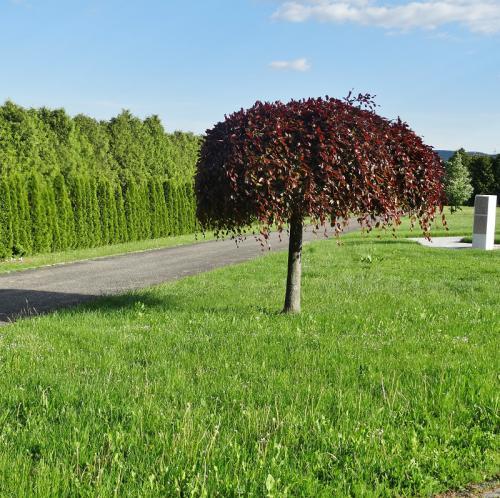Was Ist Das Für Ein Baum was ist das für ein baum garten gartenforum de