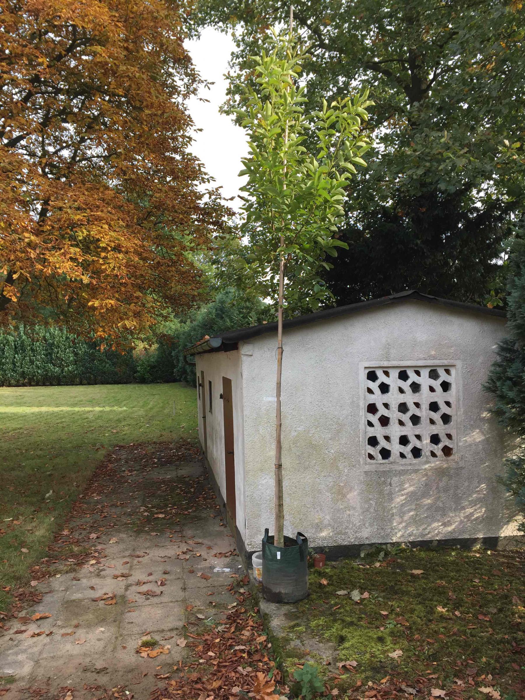 schnellwachsender Sichtschutz zum Nachbarn Garten Gartenforum
